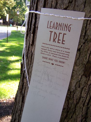 learning tree, outside
